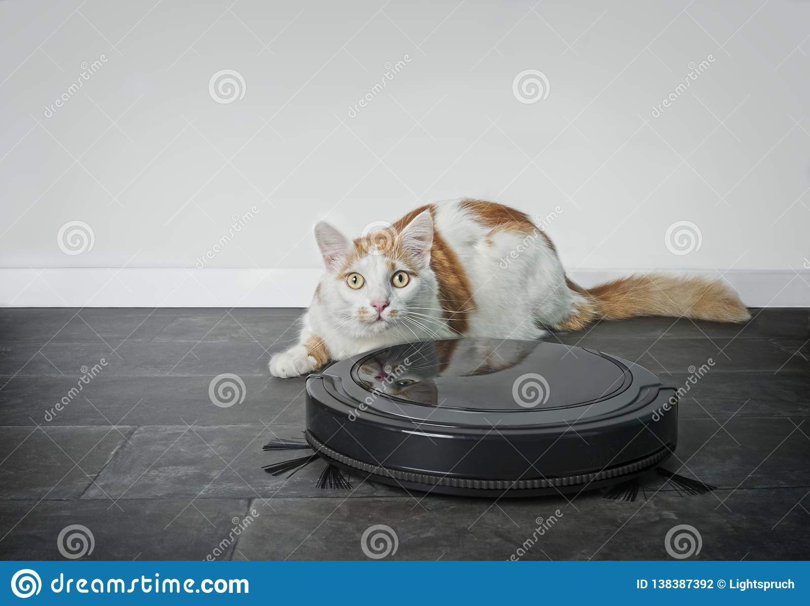 Funny tabby cat looking curious behind a robot vacuum cleaner.