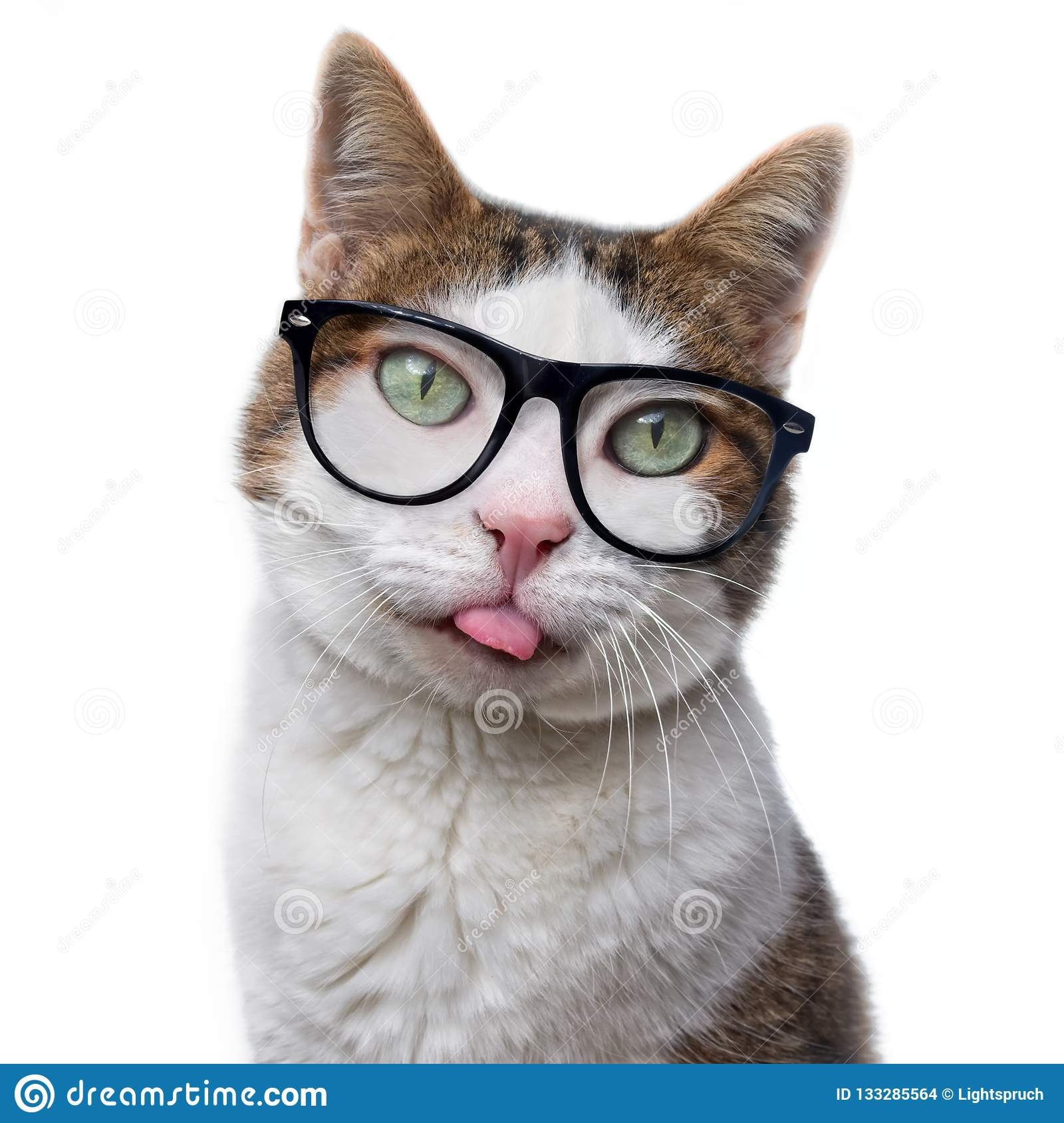 Funny tabby cat in nerd glasses put out his tongue. Is