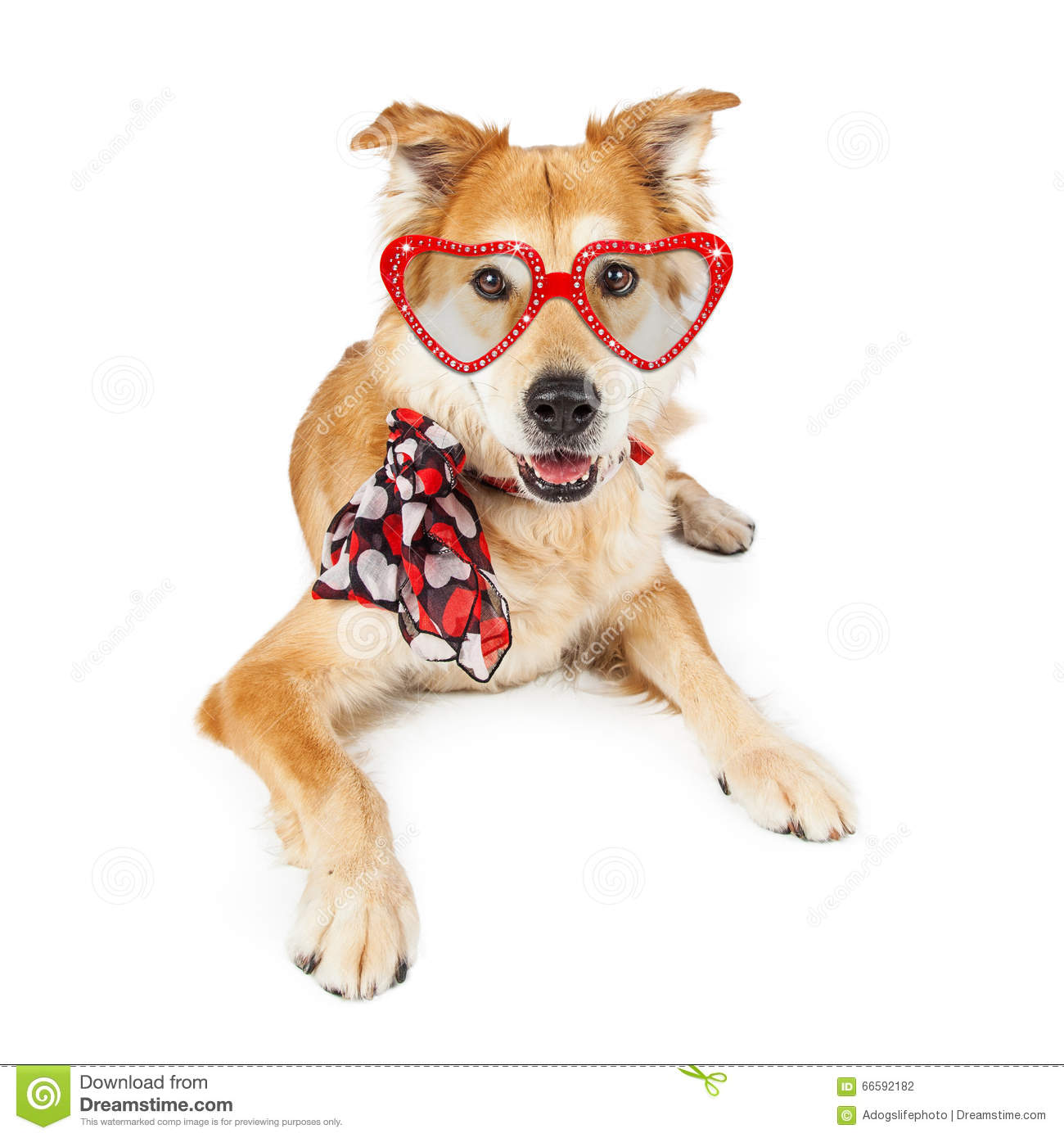 Funny Valentines Day Dog Scarf And Sunglasses Stock PhotoImage