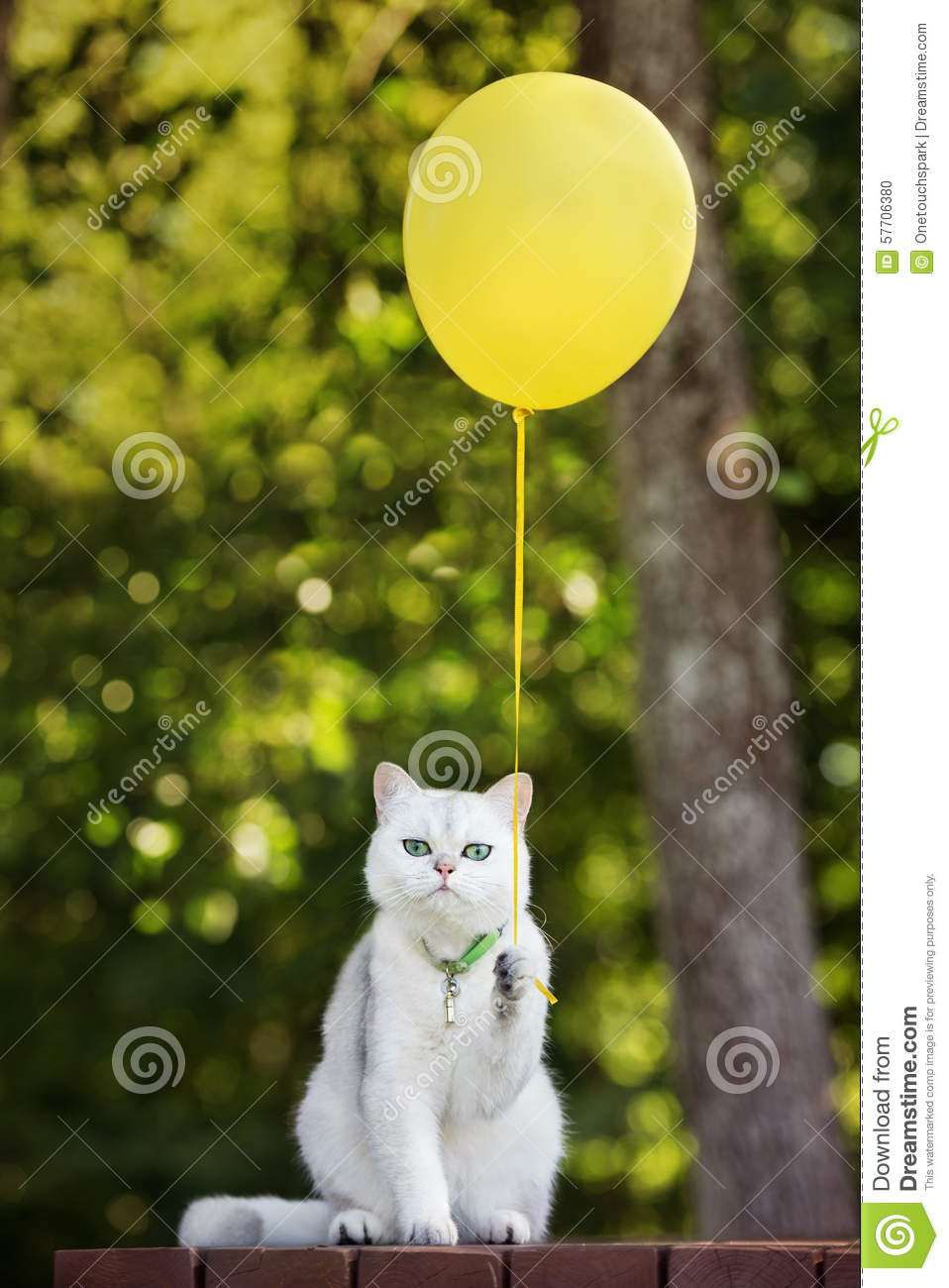 Funny White Cat Holding A Yellow Balloon Stock Photo