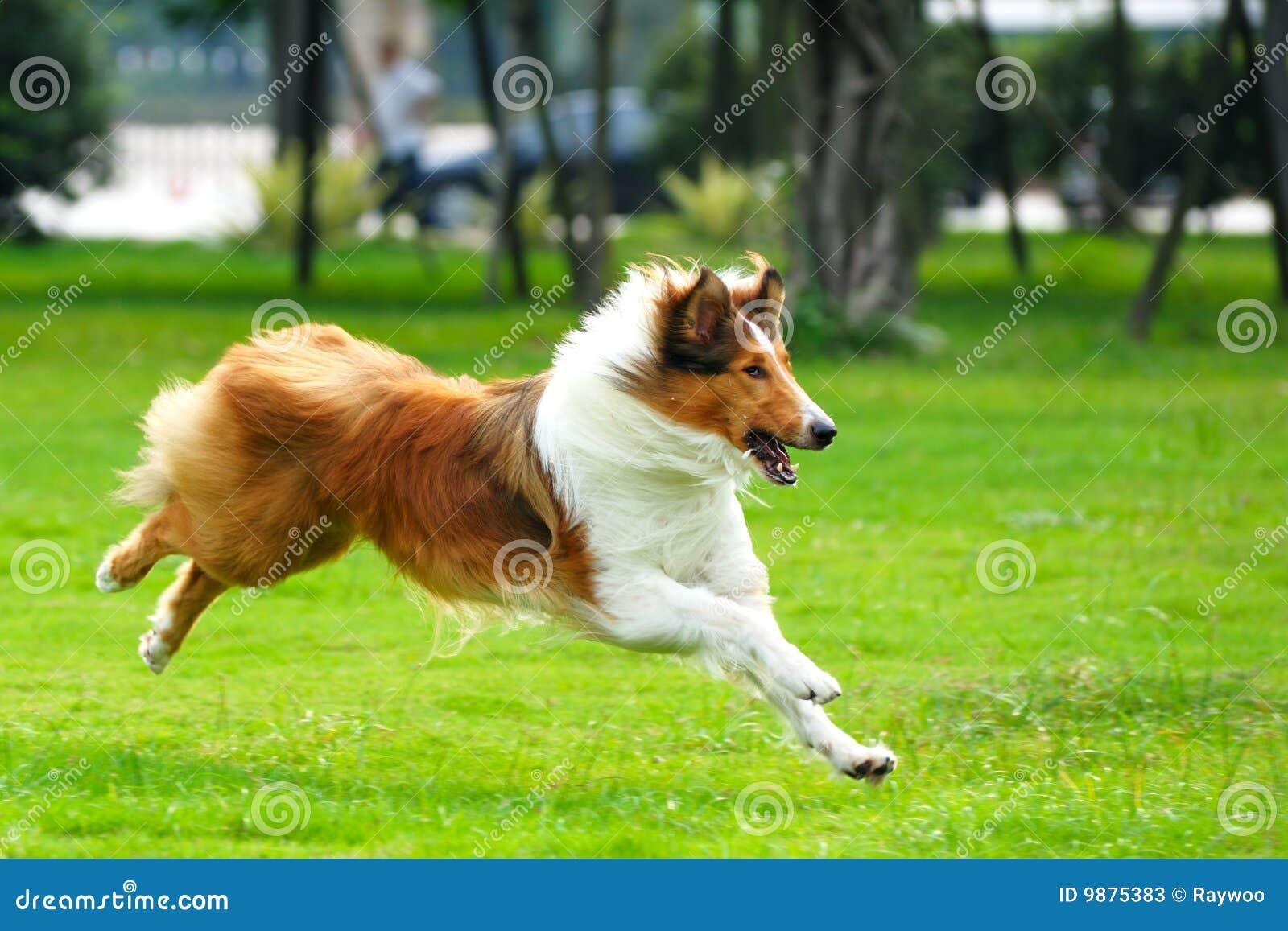 Funzionamento del cane