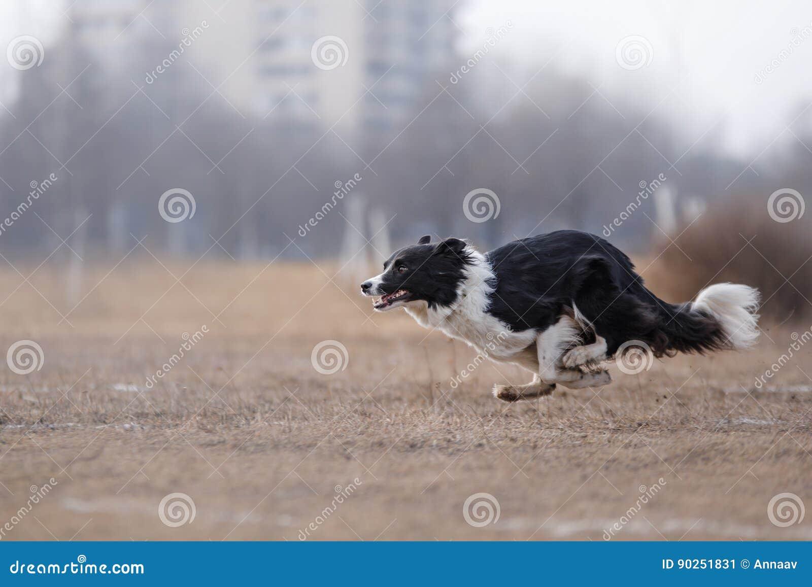 Funzionamento del cane e giocare nel parco