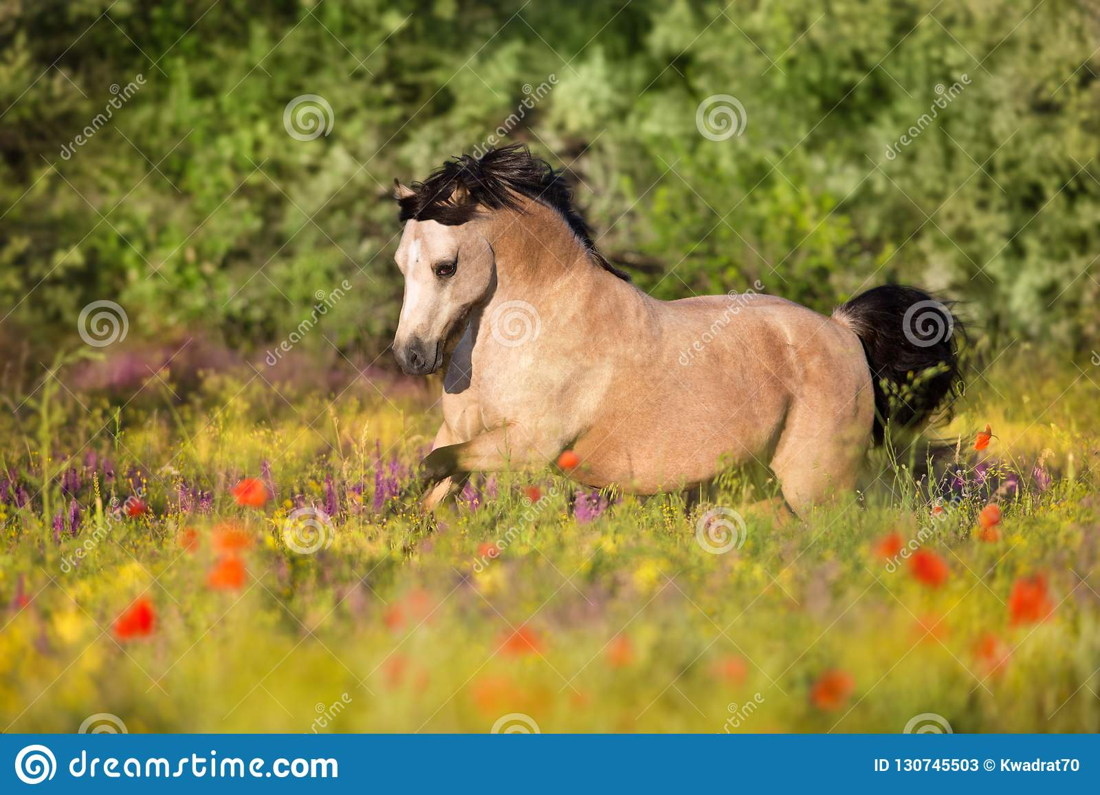 Funzionamento del cavallino del dun in fiori