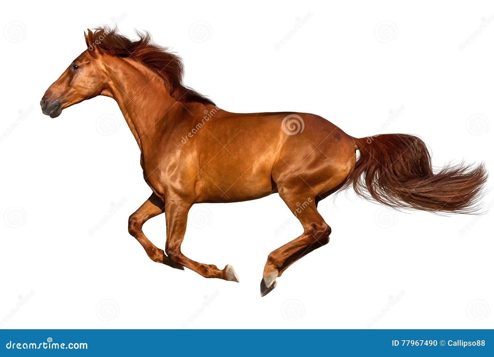 Funzionamento del cavallo isolato