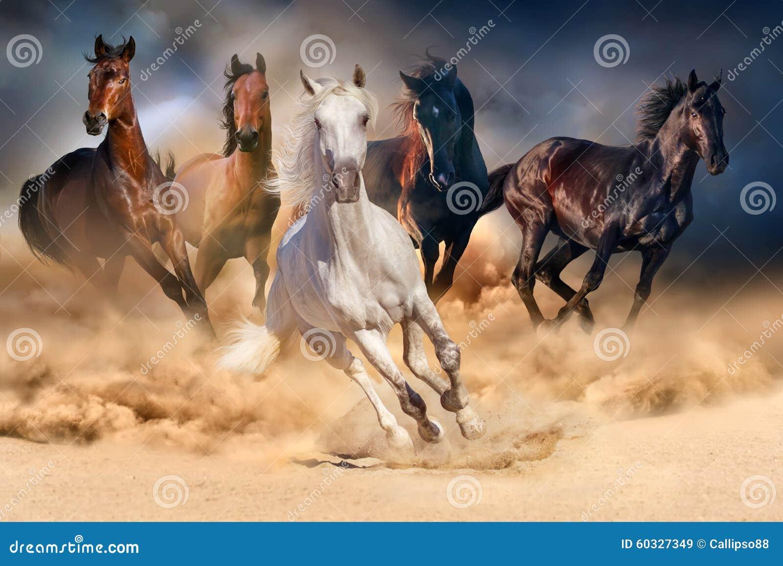 Funzionamento del gregge del cavallo