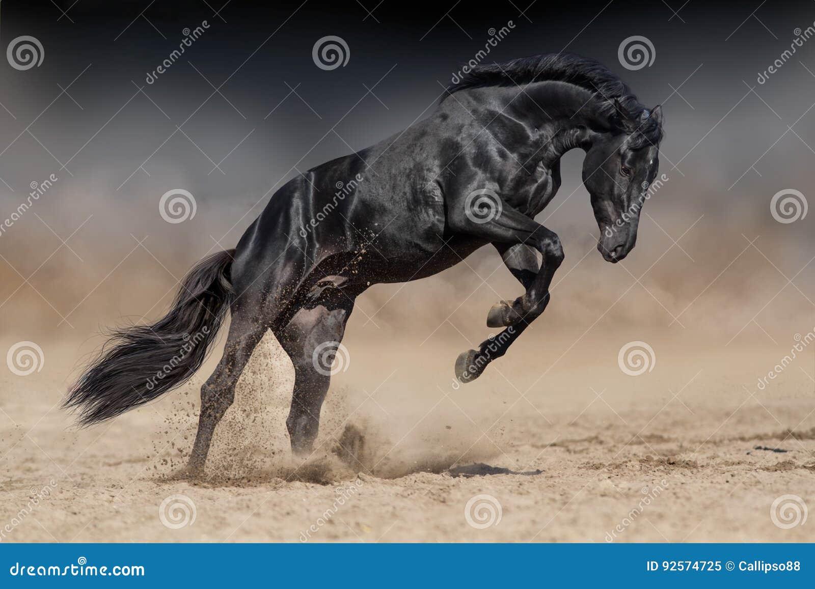Funzionamento nero dello stallone