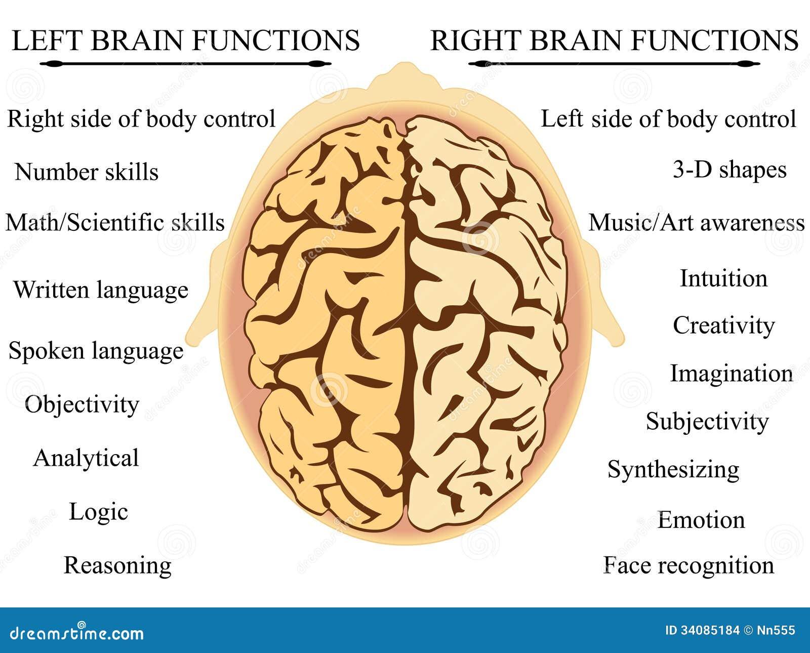 Funzioni di emisfero del cervello