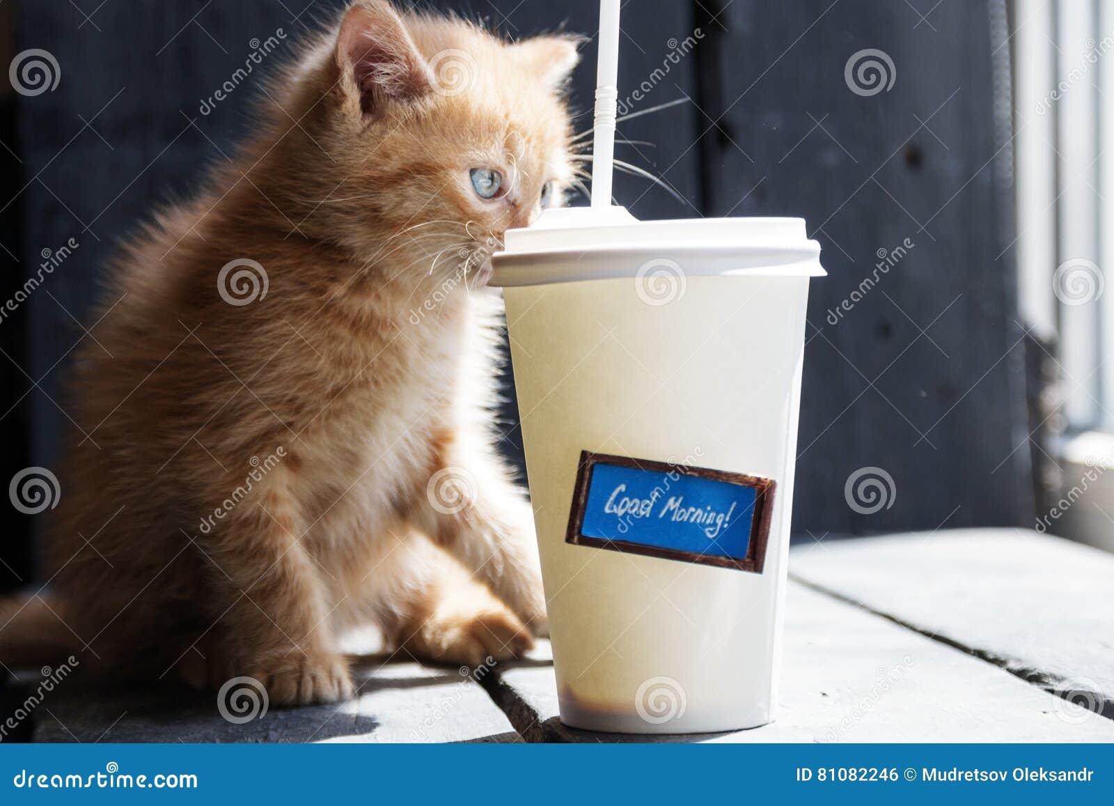 Fuoco Del Testo Di Buongiorno E Del Caffè Sul Gattino