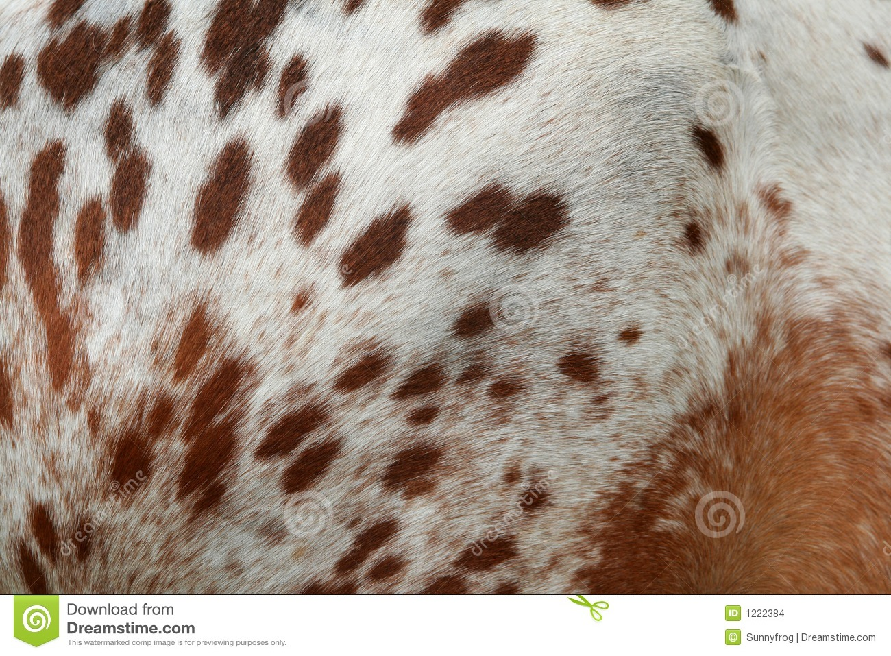 Fur Of Horse Stock Images