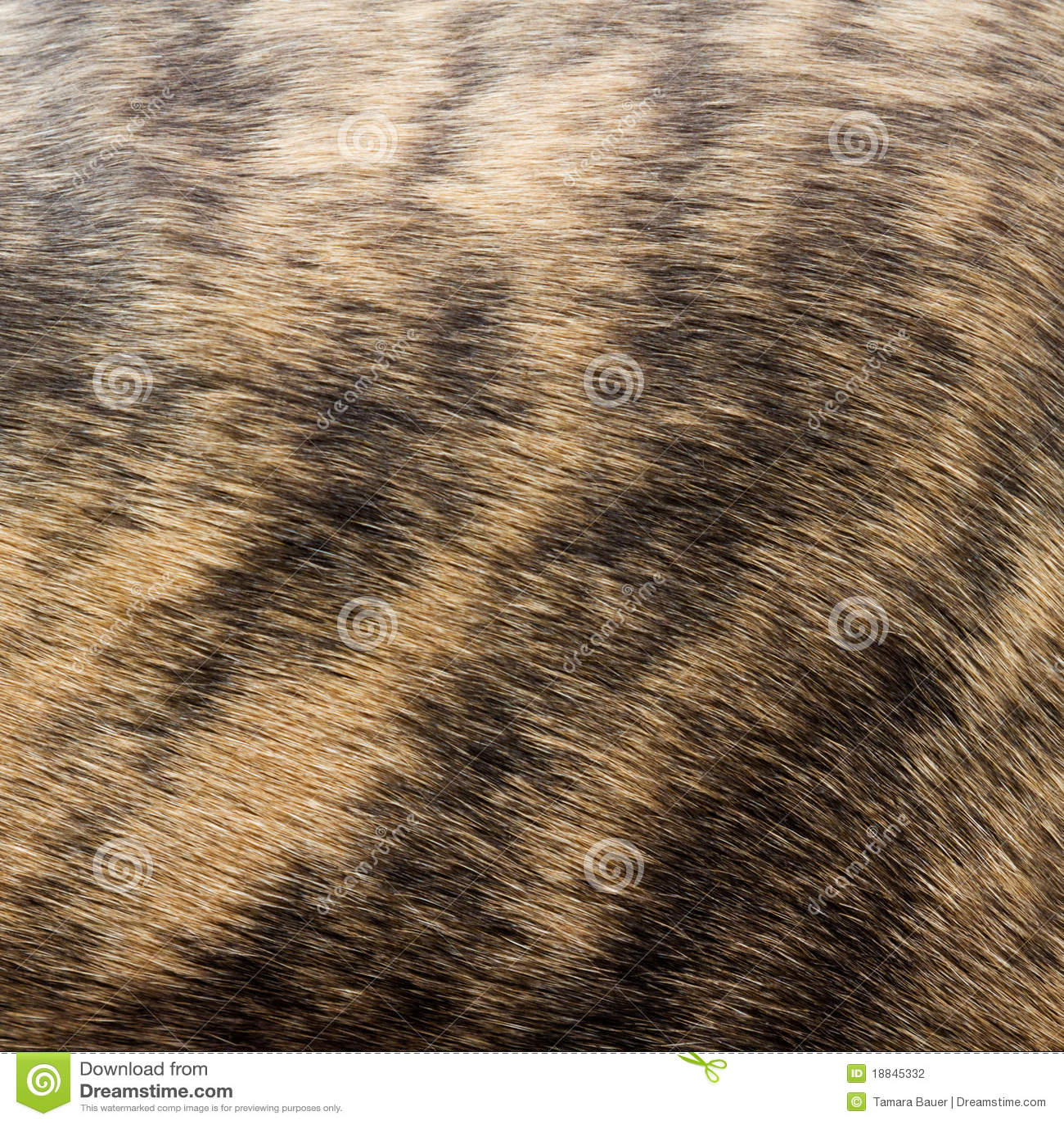 A Basenji Dog Fur Pattern Stock Phot...