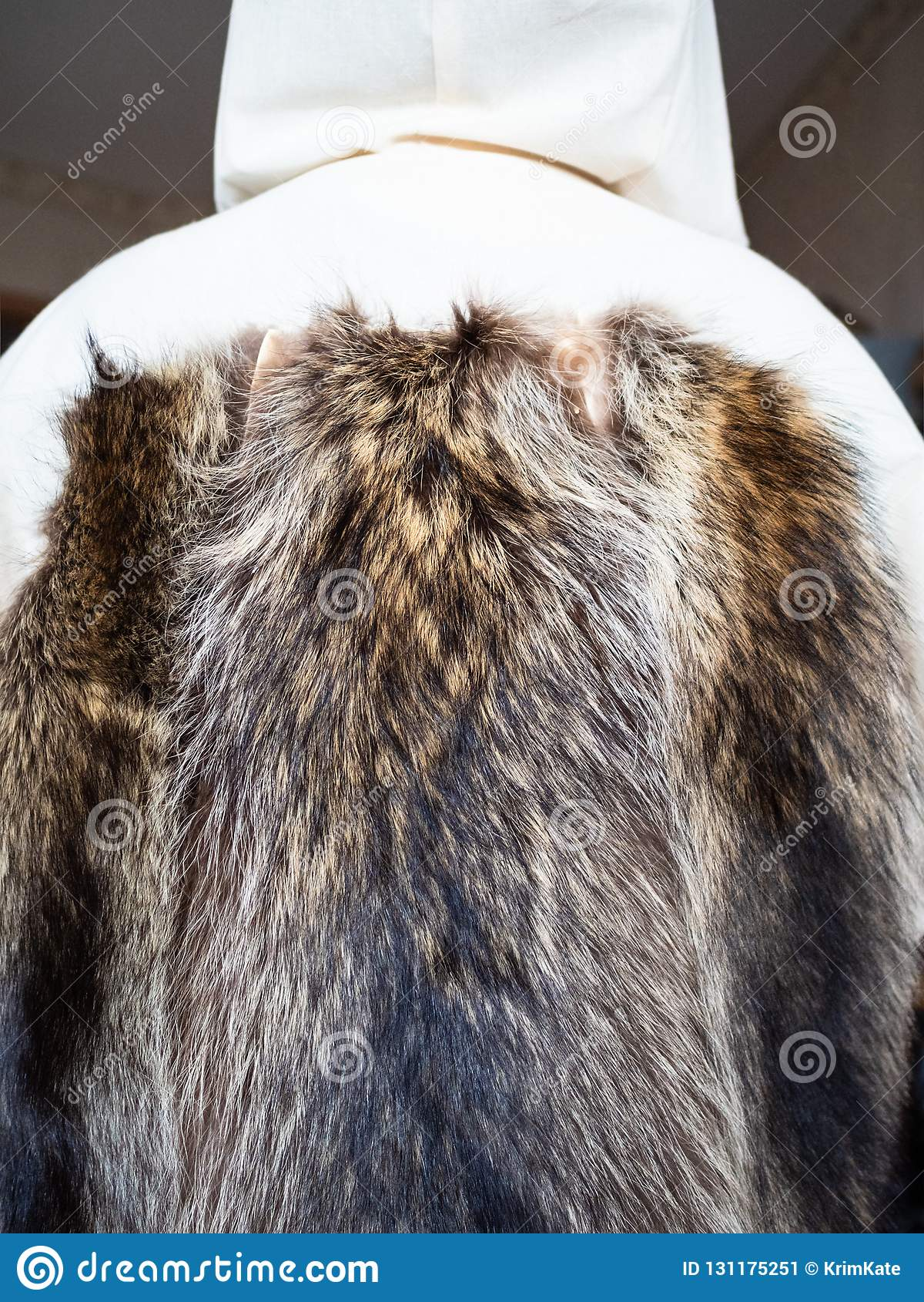 Fur pelts sewn to the coat layout on mannequin