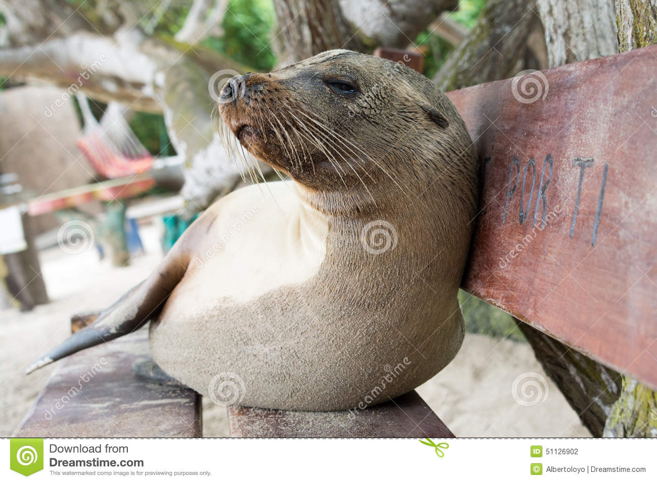 Incredible Fur Seal Relaxing On A Bench Seat Galapagos Islands Stock Machost Co Dining Chair Design Ideas Machostcouk