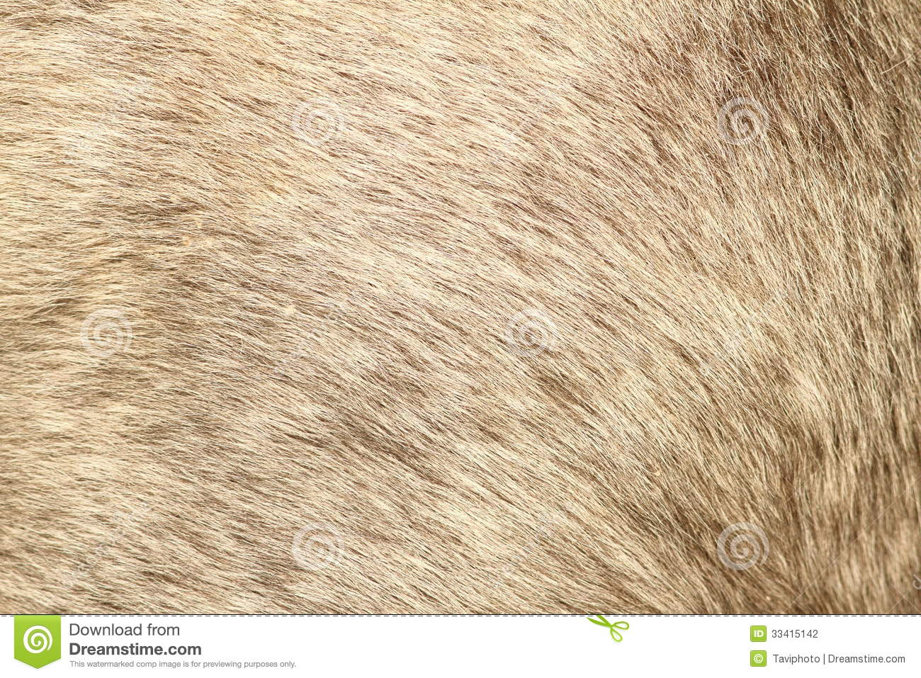 Fur Texture Of A Short Hair Pony Stock Photo Image 33415142