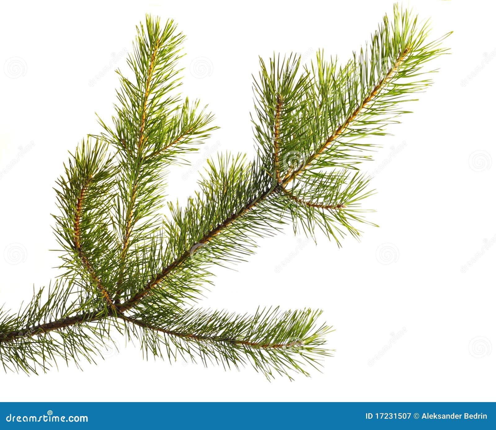 Christmas Tree U Cut