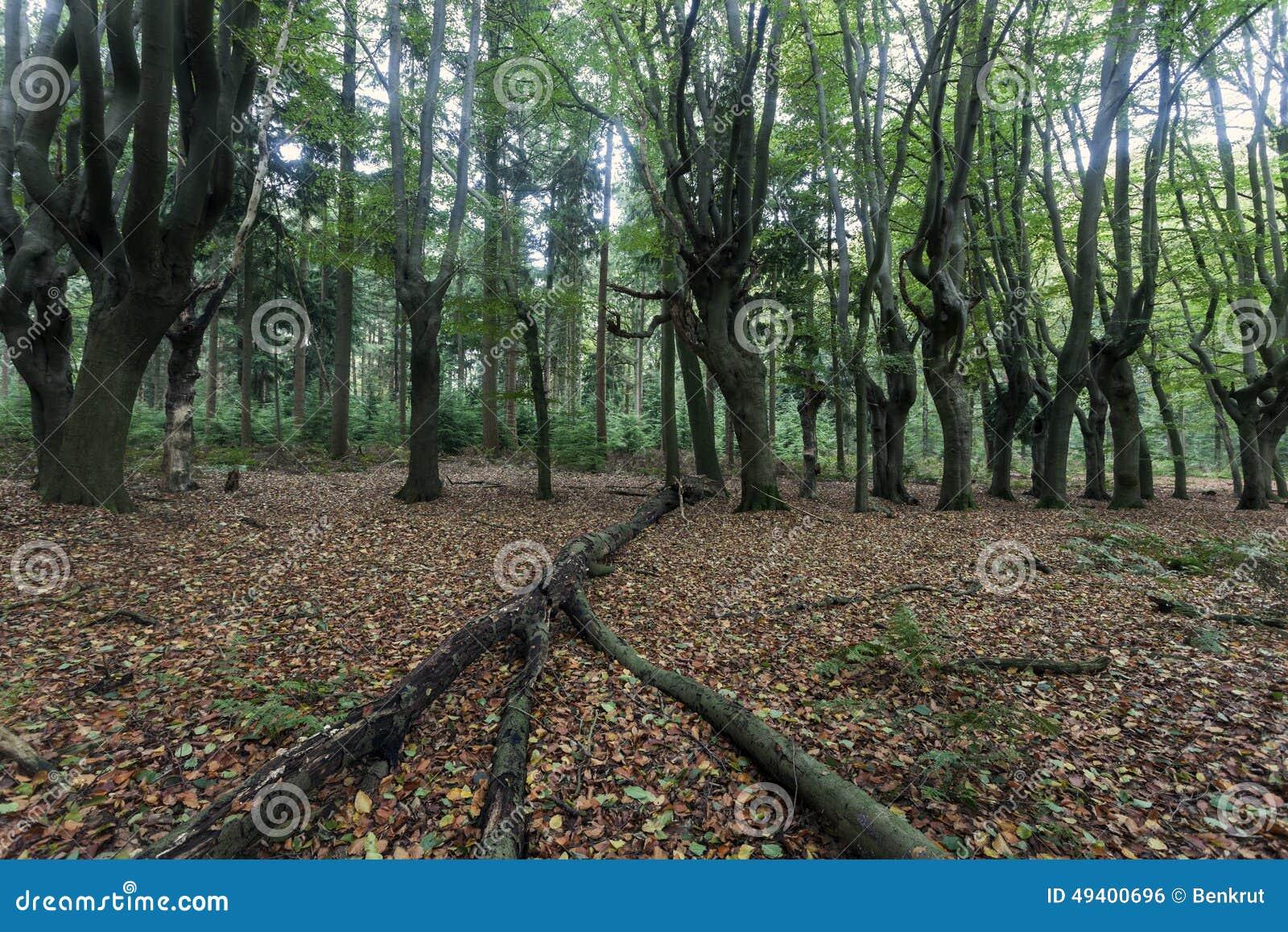 Download Furchtsame Bäume In Zwolle-Bereich Stockfoto - Bild von fall, netherlands: 49400696