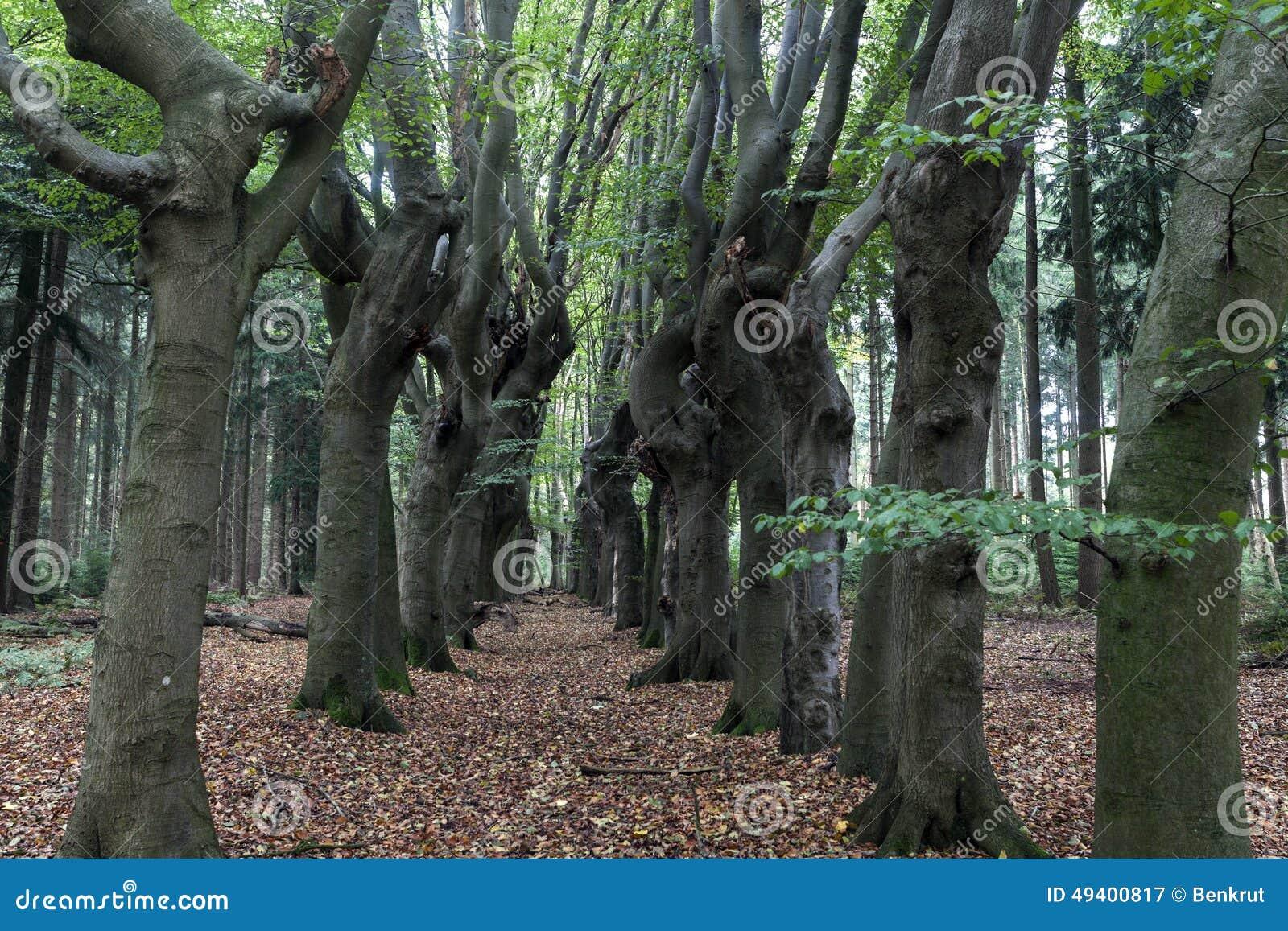 Download Furchtsame Bäume In Zwolle-Bereich Stockbild - Bild von baum, europa: 49400817
