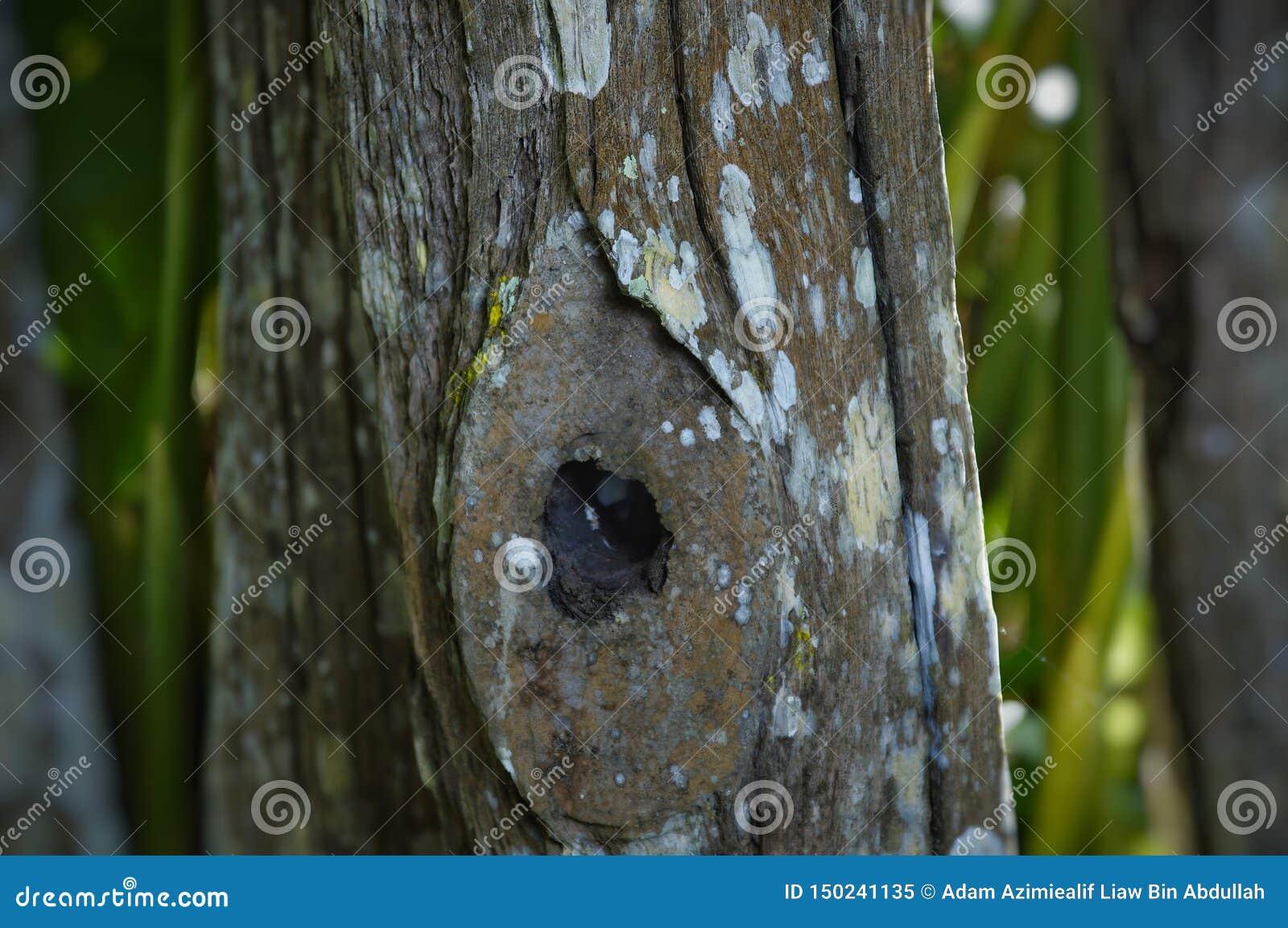 Furos em troncos de árvore