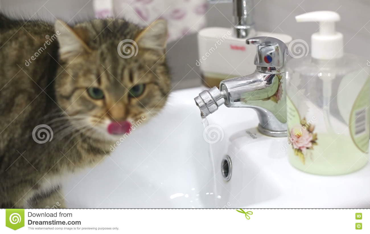 Attractive Cat Drinking Water From Faucet Crest - Faucet Products ...