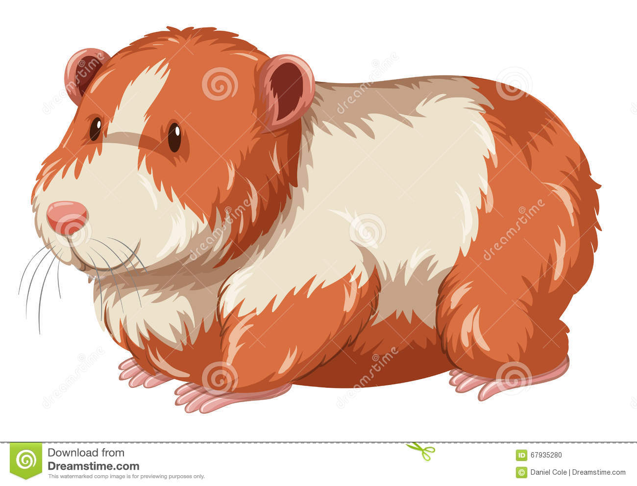 Really LOVE hamster video mature the