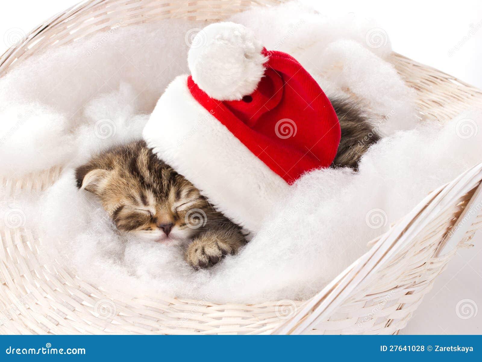Furry Kitten Sleeping On Christmas Royalty Free Stock ...