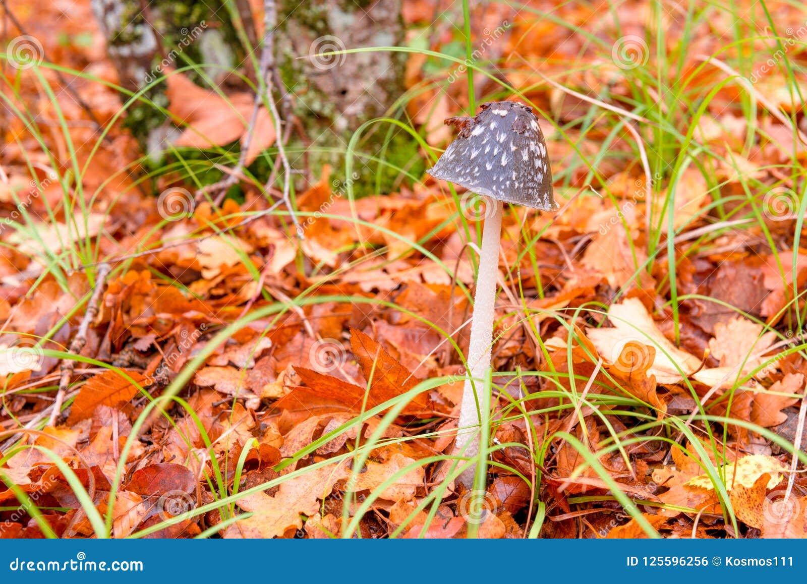 Futenclose-up in het bos onder