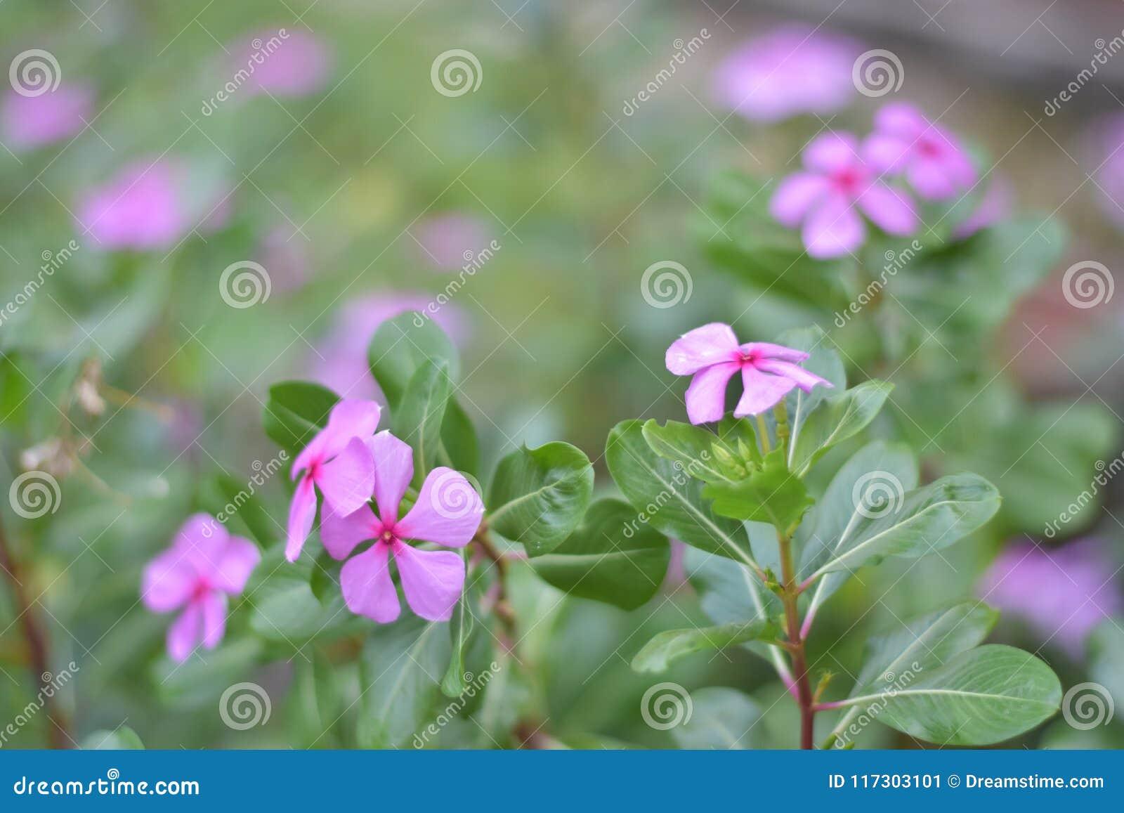 Futuro rosado de la flor