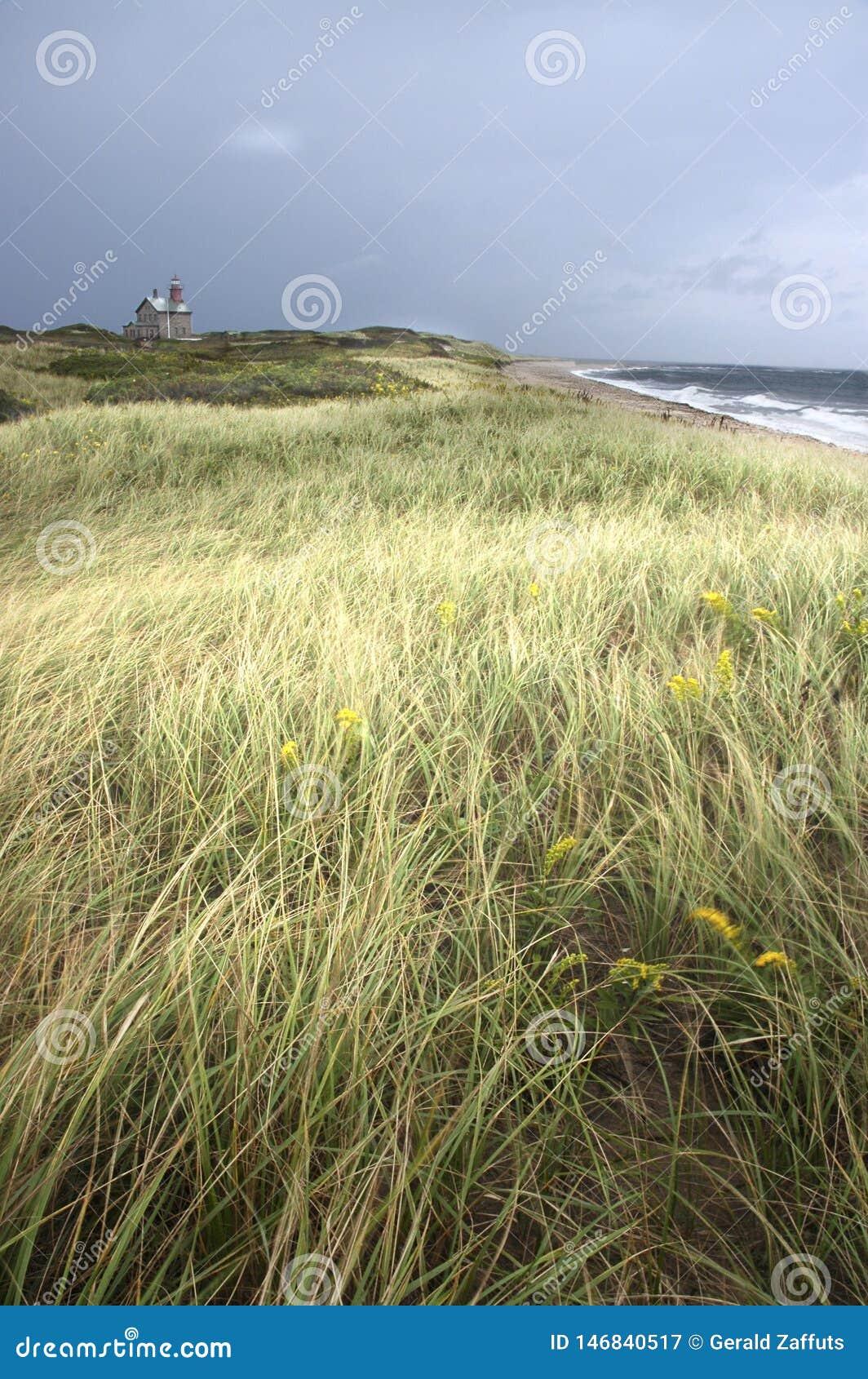 Fyr och hav med det gräs- fältet i förgrund