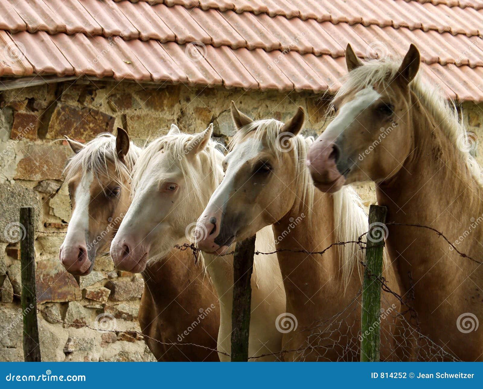 Fyra hästar