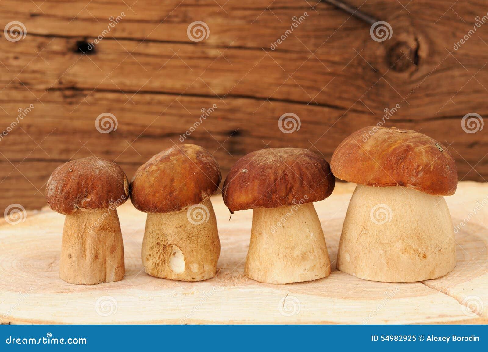 Fyra lösa porcinichampinjoner som i rad står på träbrädewi