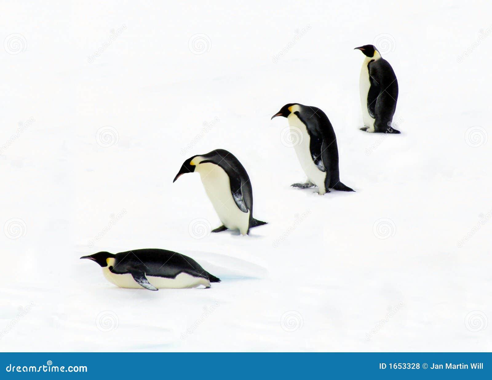 Fyra pingvin