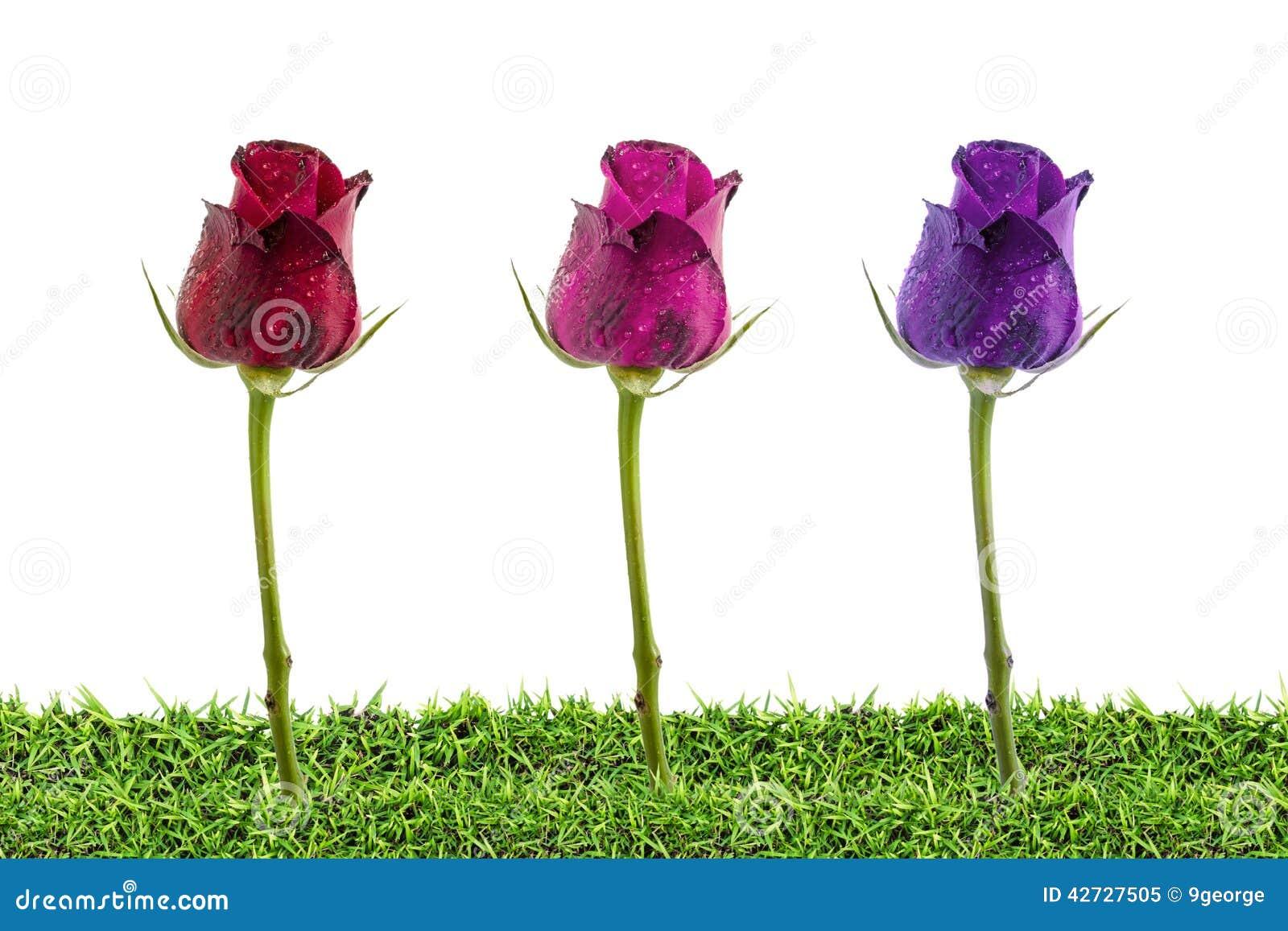 fyra röda rosor