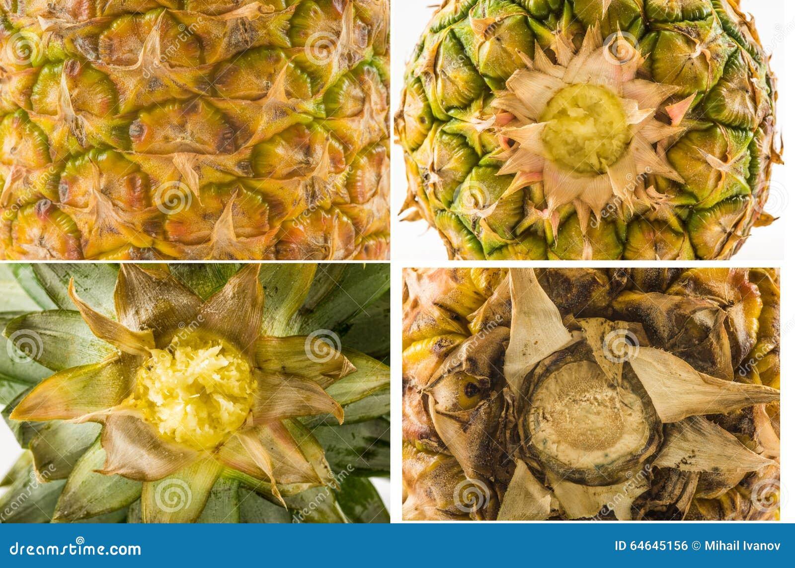 Fyra texturer av olika typer av ananaspeelen - överkant-, botten- och sidosikt