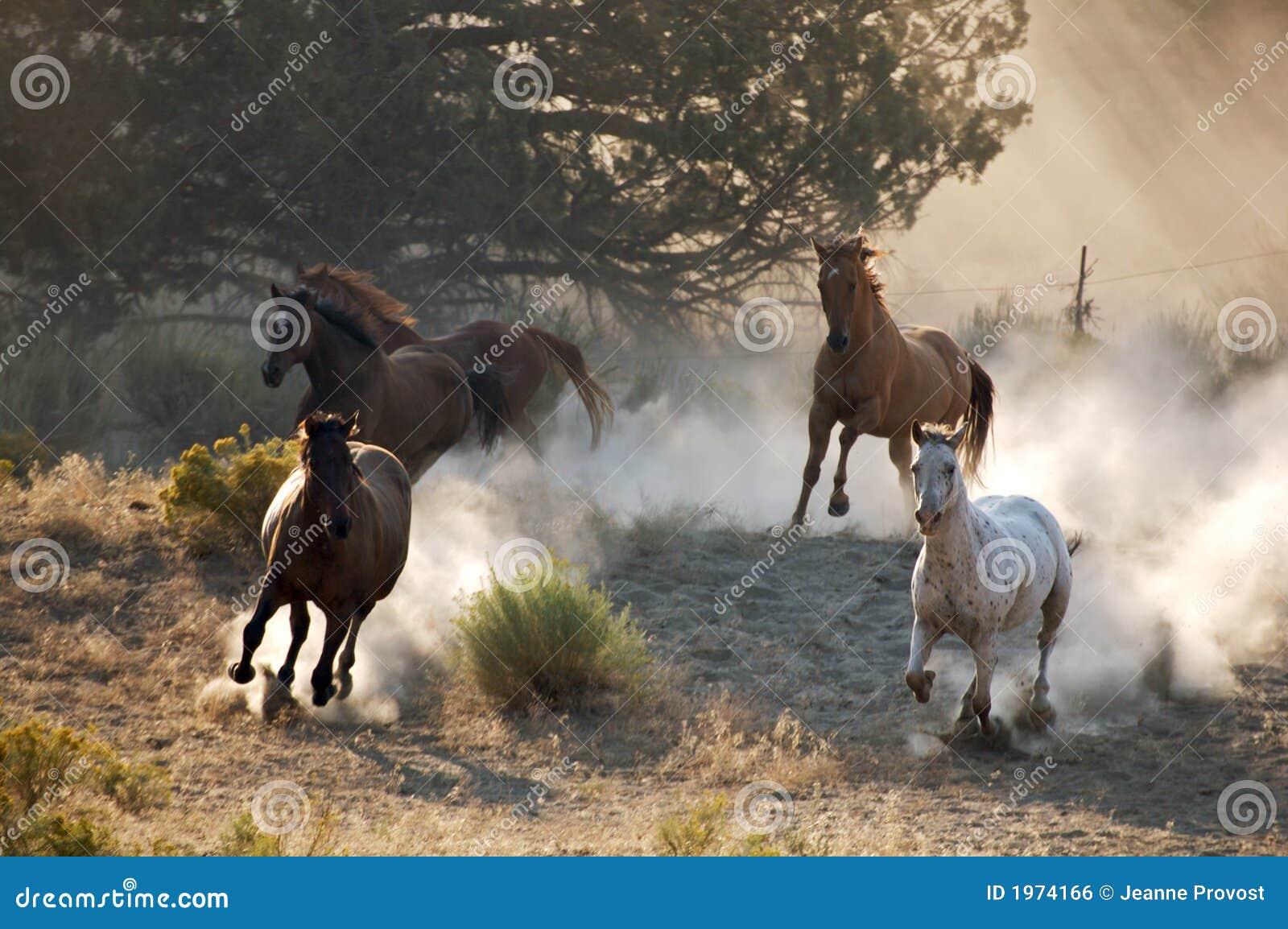 Fyra wild hästar