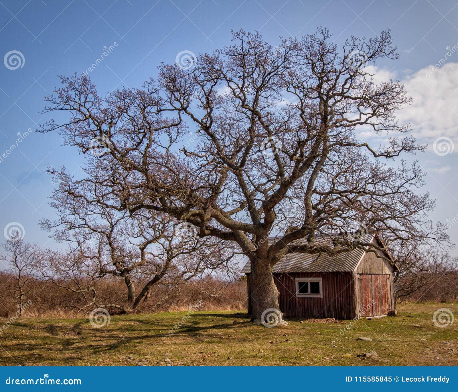 Fyriakttagarekabin och träd