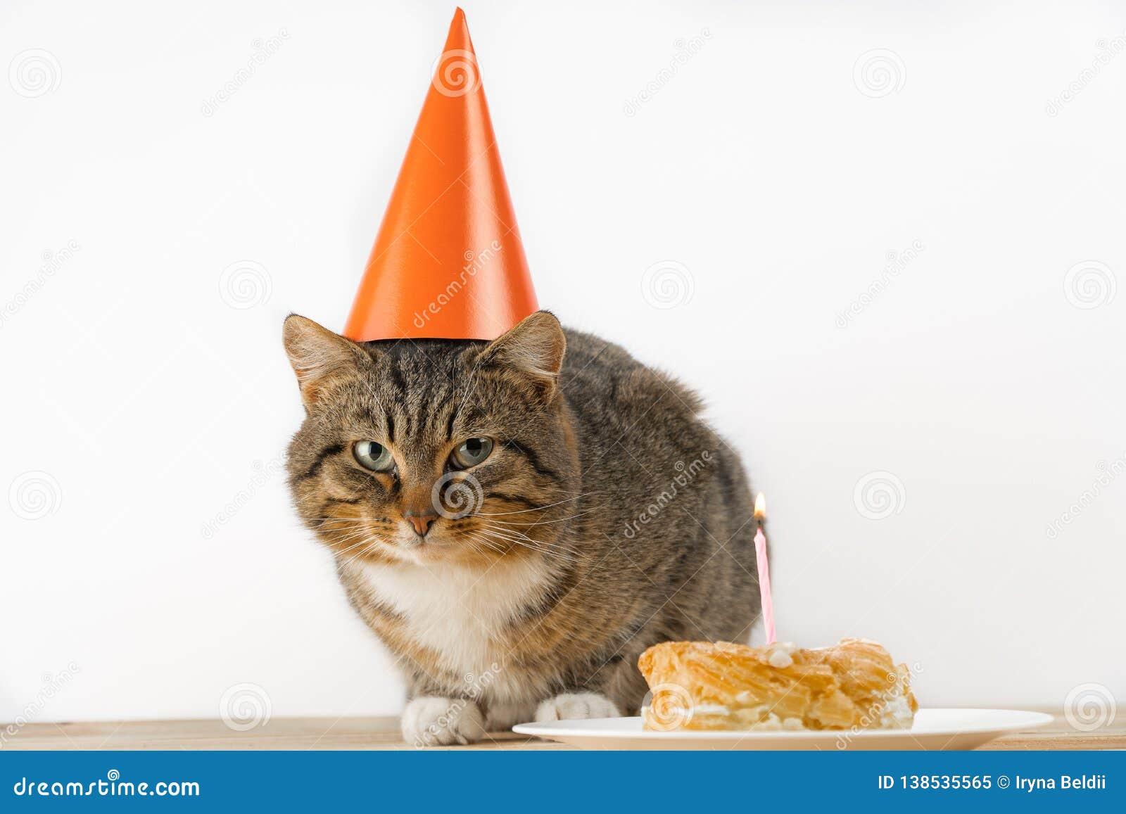 Gâteau Danniversaire De Chat Chat Dans Un Chapeau De Fête Image