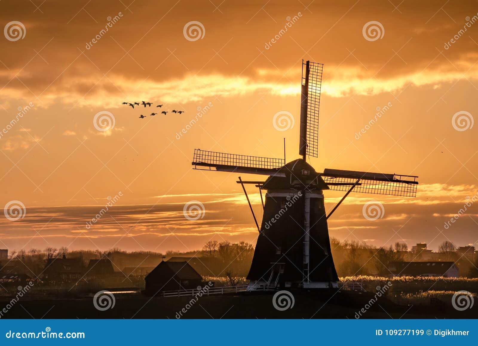 Gänse, die gegen den Sonnenuntergang auf der niederländischen Windmühle fliegen