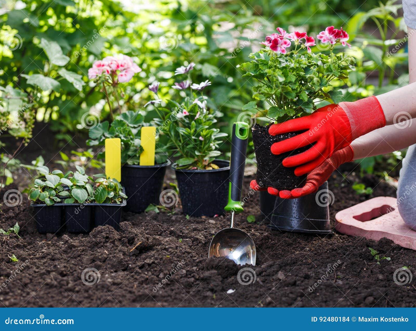 gärtner übergibt das pflanzen von blumen im garten, abschluss herauf