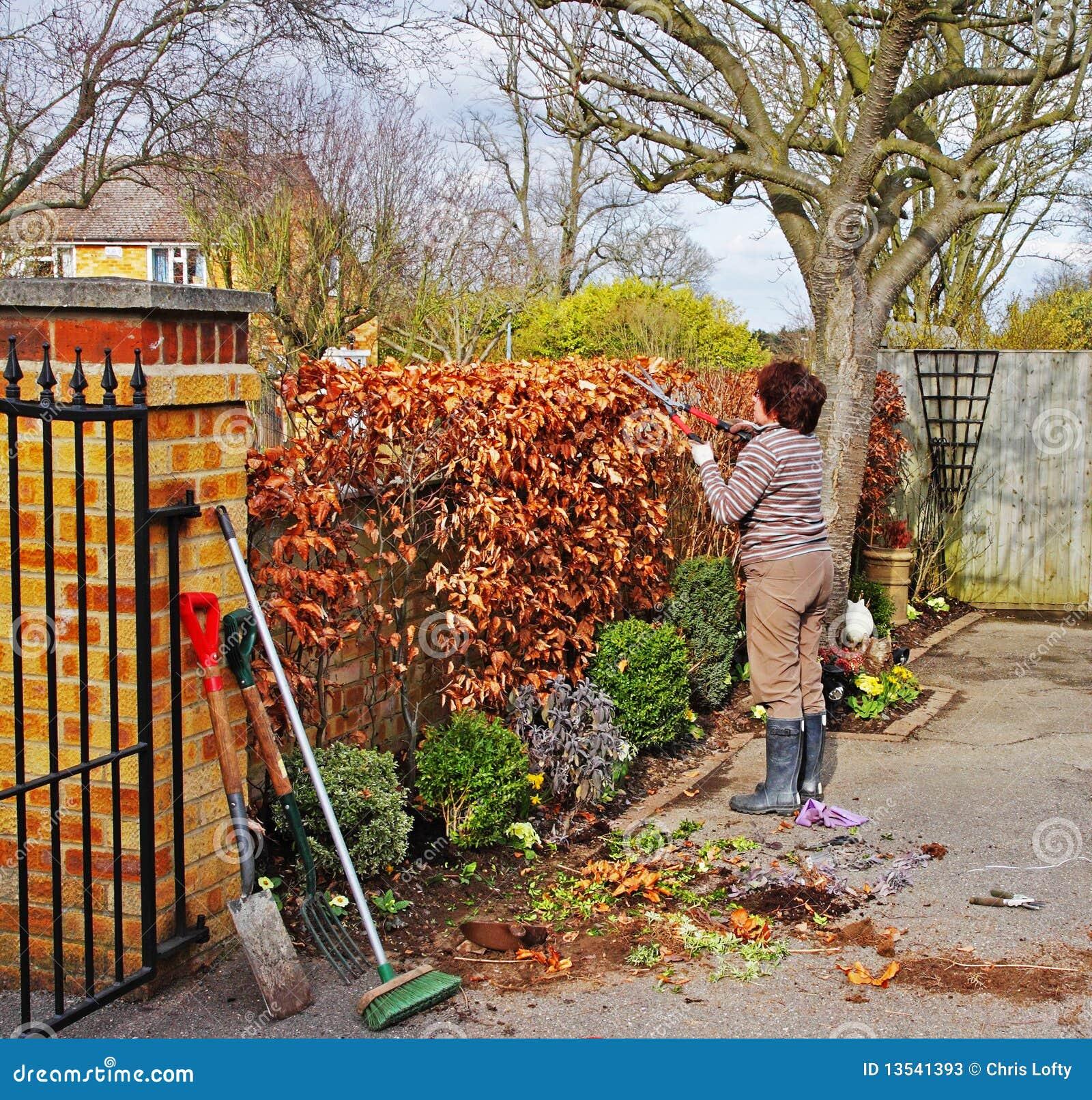 Gärtner Der Eine Buche Hecke Trimmt Stockfotos Bild