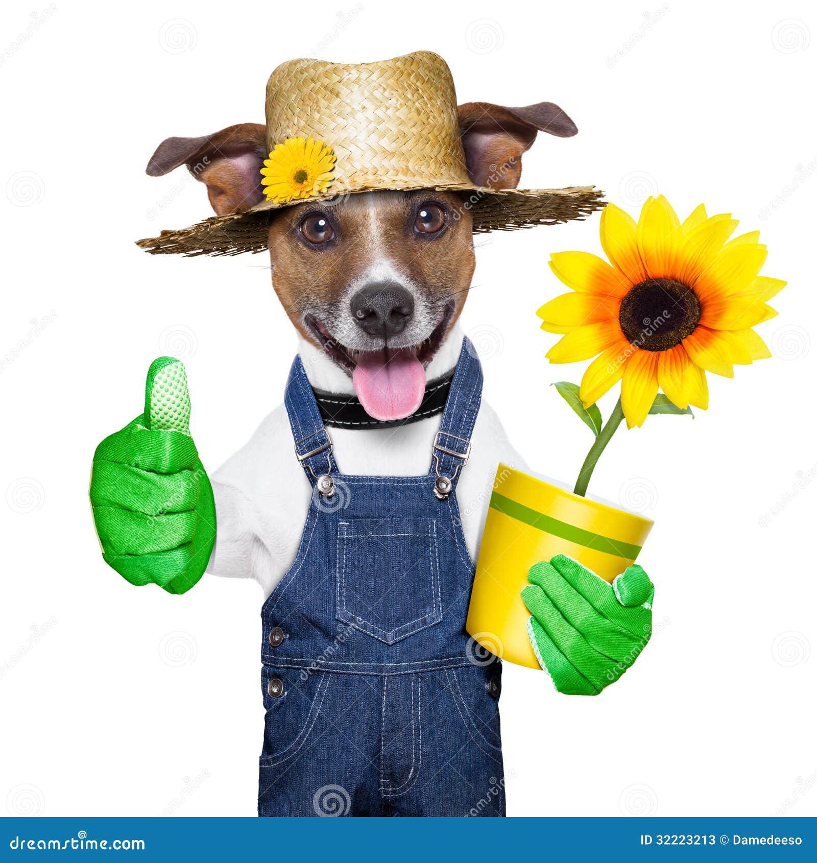 Gärtnerhund