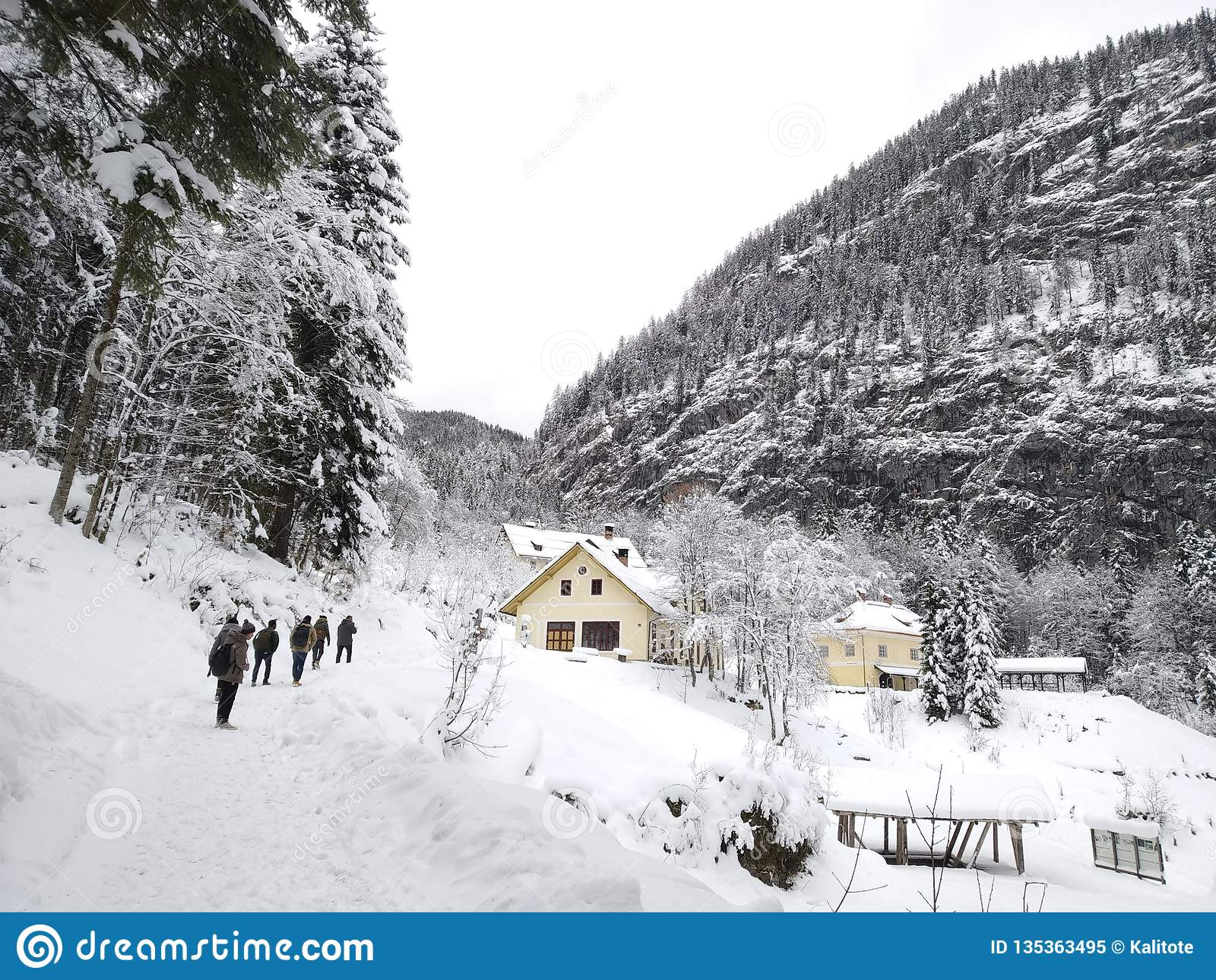 Gå ho de snöig skogarna av Hallstatt, Österrike Vintern beskådar uppifrån
