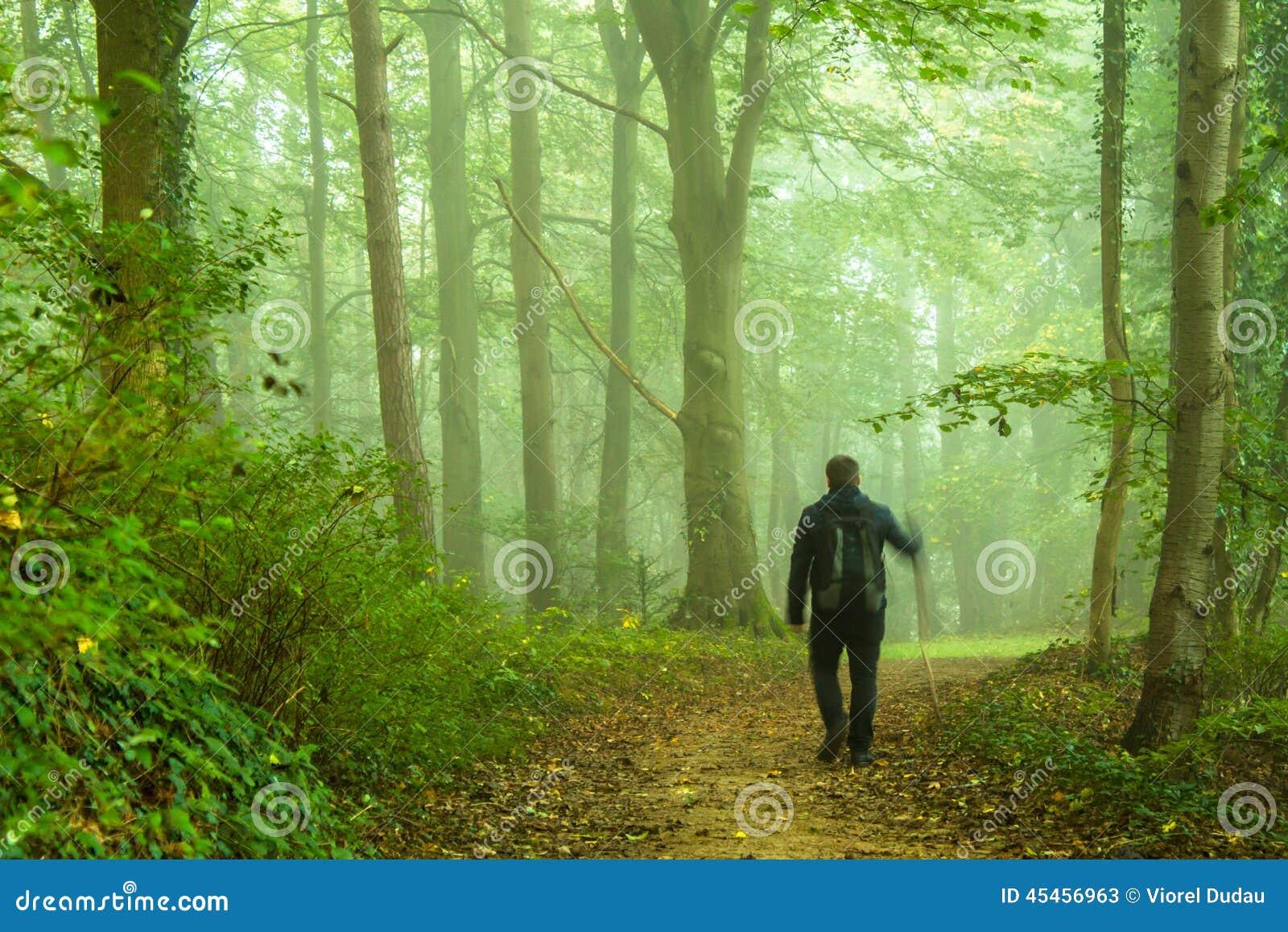 Gå i skog