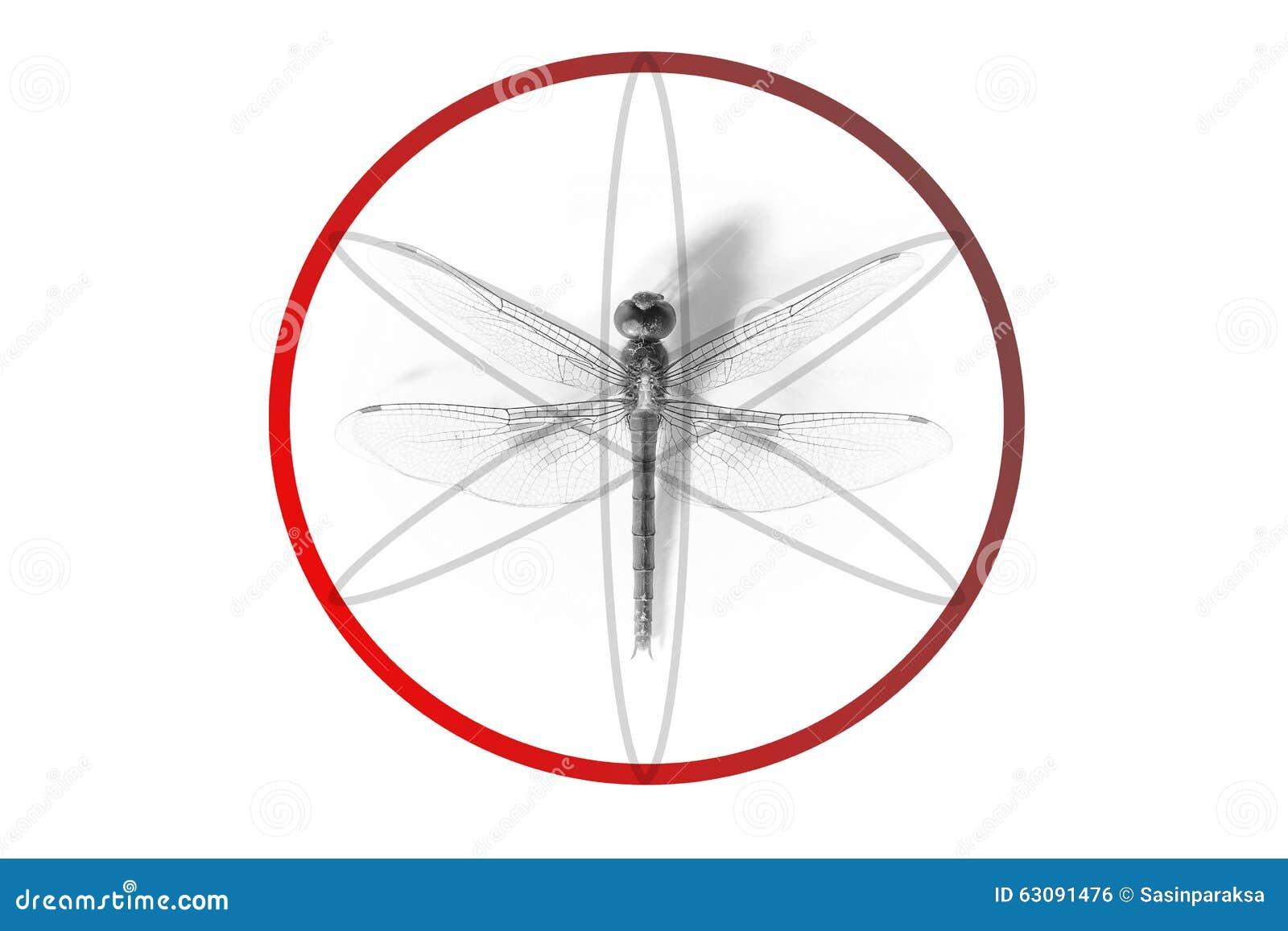 Download Géométrique Abstrait Fait à Partir De La Proportion De Libellule Illustration Stock - Illustration du fuselage, élégant: 63091476