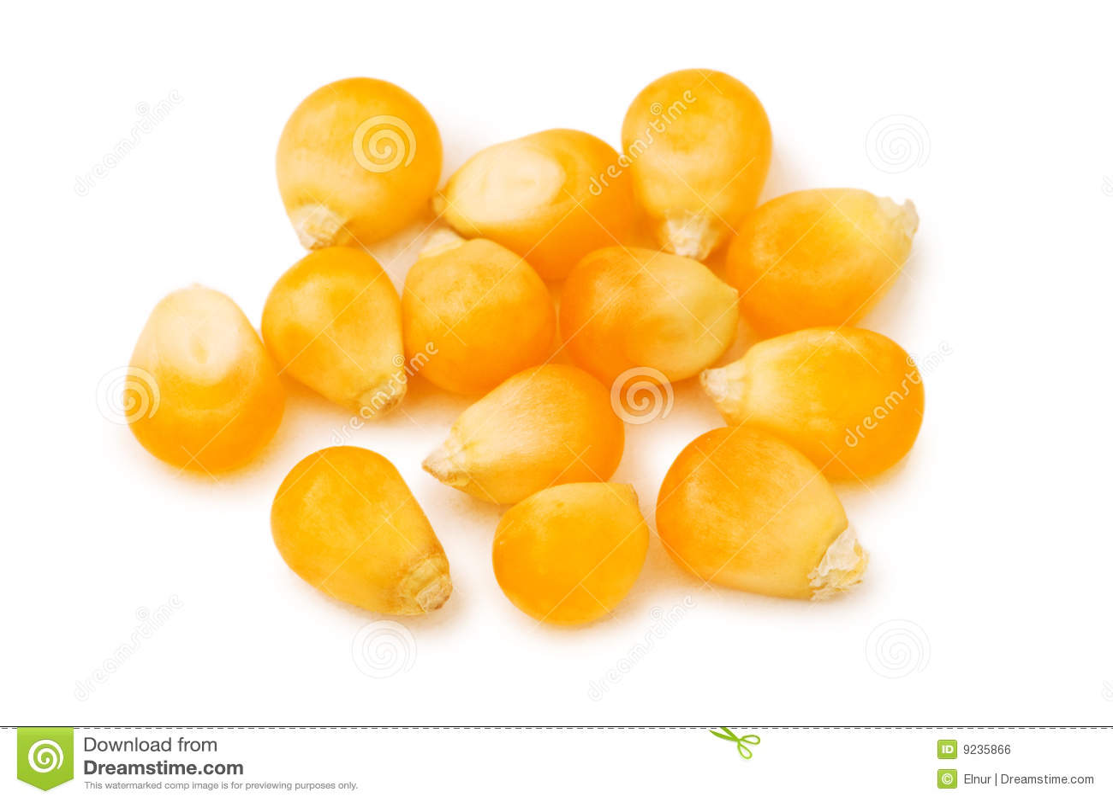 Gérmenes del maíz aislados