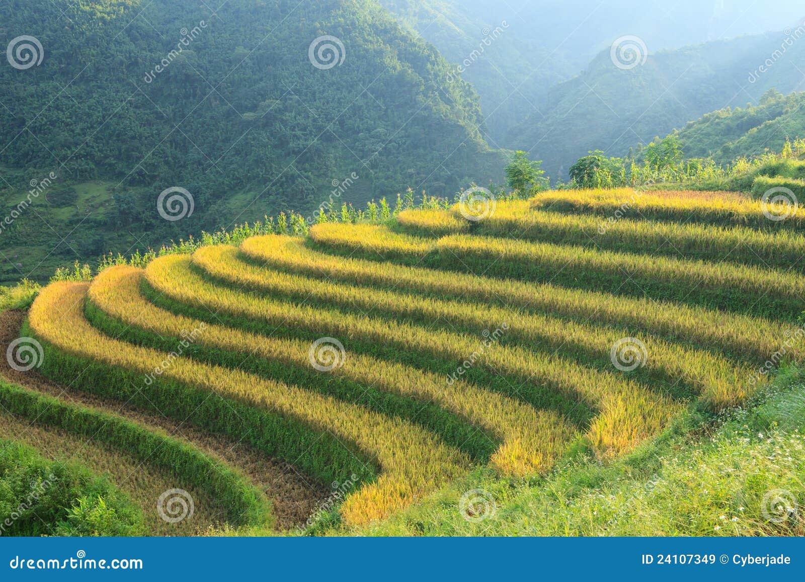 Gór ryż tarasy