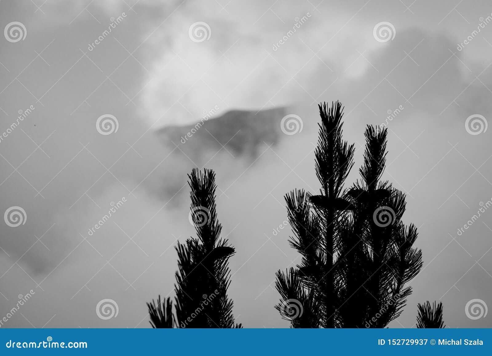 Góra Olympus w Grecja za mgłą Conifer na pierwszy planie