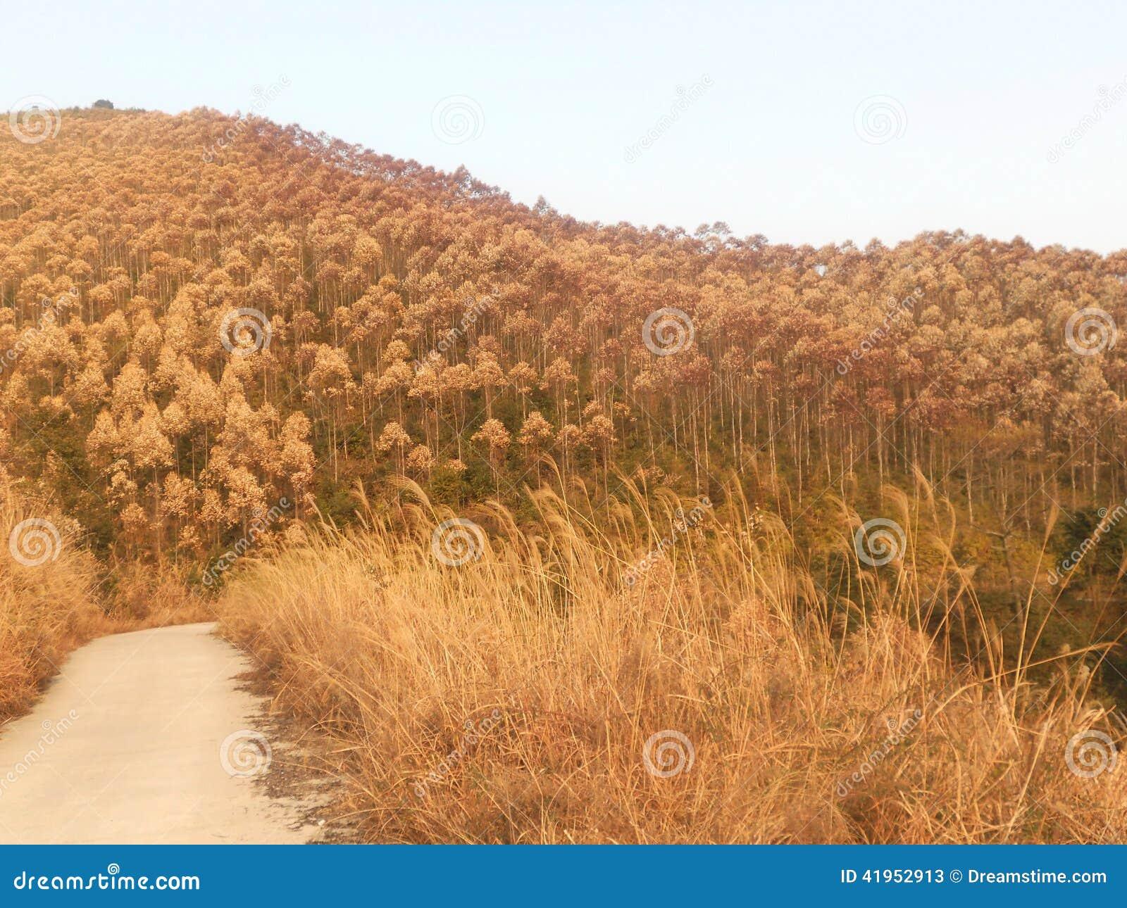 Góra pełno piękna roślina i nadzieja