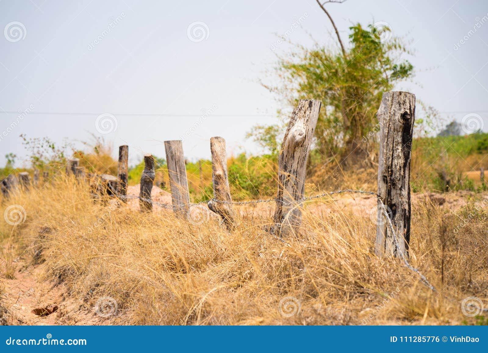 Górska sceneria w środkowym Wietnam z drewnianym ogrodzeniem robić nieboszczyk, podpalał drzewa i żółtego trawy pola,
