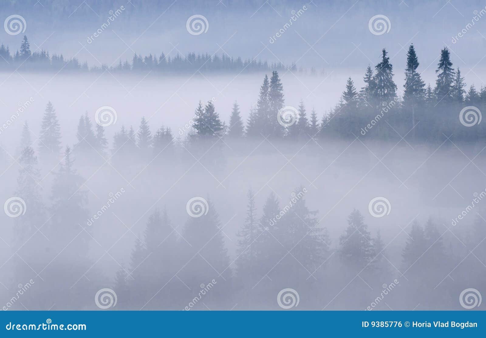 Góry lasowe mgliste góry
