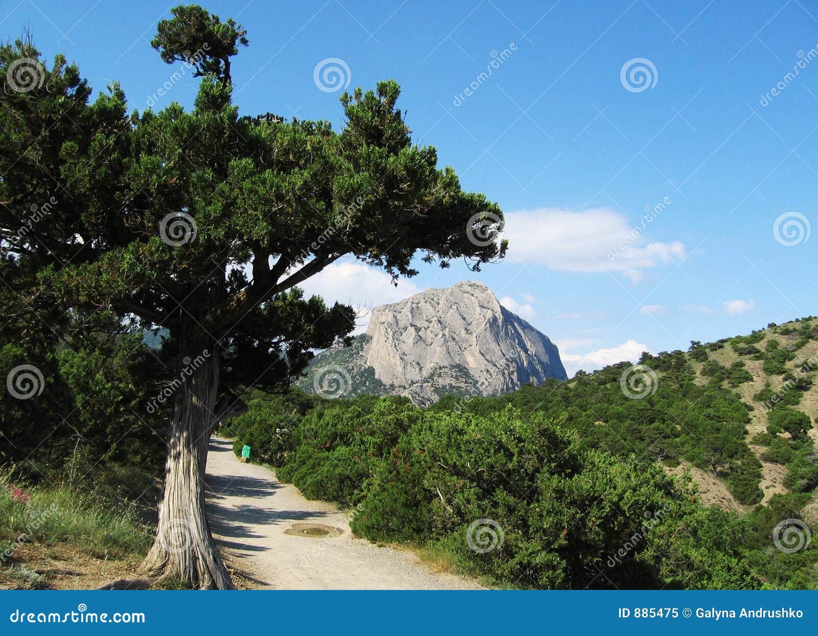 Góry na krymie sokol