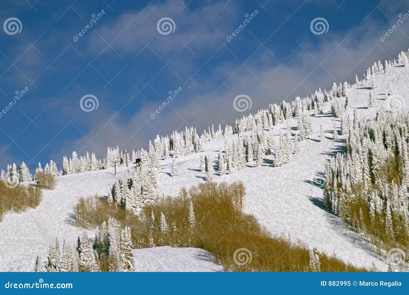 Góry zboczy śnieżni drzewa